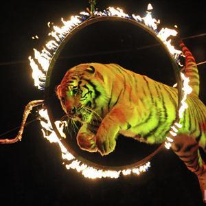 Цирки Одесского