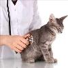 Ветеринарные клиники в Одесском